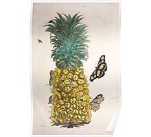 Metamorphosis insectorum surinamensium Maria Sibylla Merian 1705 0015 Insects of Surinam_jpg Poster