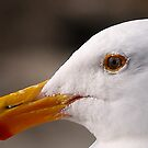 The Gull by the57man