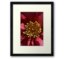 Sweet in Yellow & Pink Framed Print