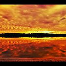 """Maroochy river  by Phineous """"Flash""""   Cassidy"""