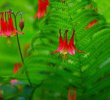 Flowering Fern by Brian Dodd