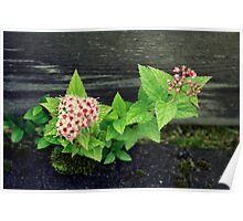Flowery plant Poster