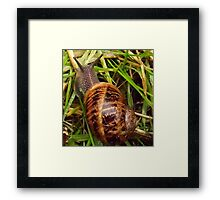 Nice day for a slither! Framed Print