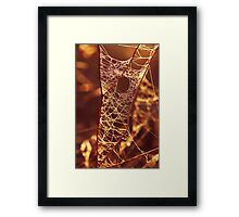There's a hole in my web....! Framed Print
