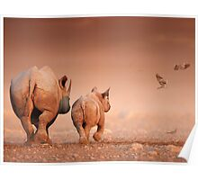 Black Rhino cow and calf Poster