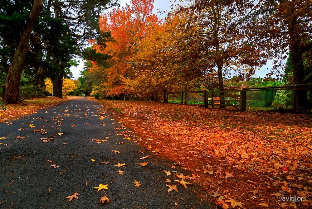 The Glorious Colours of Autumn - Southern Highlands NSW Australia  by DavidIori