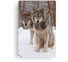 Timber Wolf Pair Canvas Print