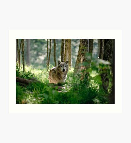Timberwolf in Forest Art Print