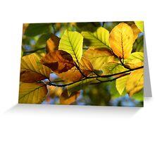 Autumn Leaves - Fagus Sylvatica Greeting Card