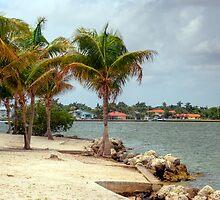 Miami Shores by Roland Pozo