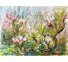 Spring Magnolia Photographic Print