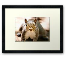 Got Any Nuts? Framed Print