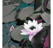 Dark depths Photographic Print