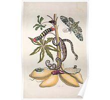 Metamorphosis insectorum surinamensium Maria Sibylla Merian 1705 0024 Insects of Surinam_jpg Poster