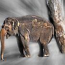 In Elephant Heaven by miroslava