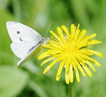 Butterfly....  by DonalMW