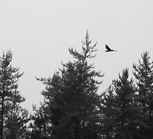 Raven Flying in Black and White by PeggCampbell