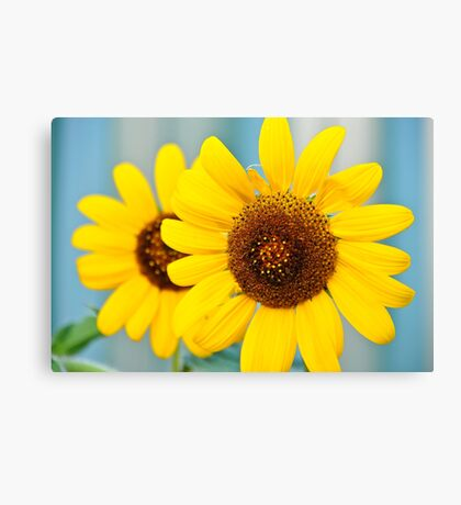 Bright sunflowers Canvas Print