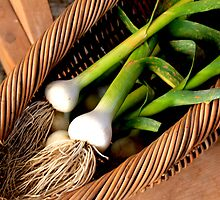 Leeks in Basket by Renee D. Miranda
