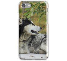 Husky on a Sidewalk iPhone Case/Skin