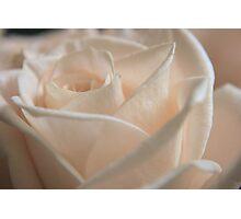 Light Rose Photographic Print