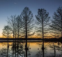Cypress Silhouette by Sherry V. Smith Fine Art Photography