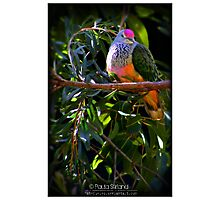 Fruity Pigeon Photographic Print