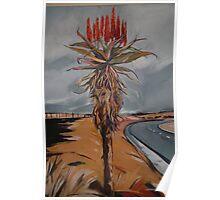 Aloe in the Veld Poster