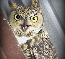 wwwhhhooooo ya lookin at...?? by conilouz
