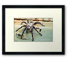 HORNED BABOON SPIDER - Ceratogyrus brachycephalus Framed Print
