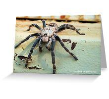 HORNED BABOON SPIDER - Ceratogyrus brachycephalus Greeting Card
