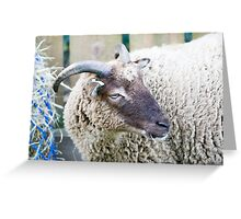 Soay Sheep Greeting Card
