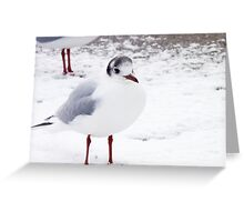 Black-headed Gull in Snow Greeting Card
