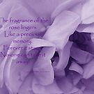 Fragrance of the Rose by sarnia2