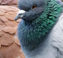 Lakeside Pigeons Sticker