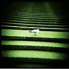 Opera House Steps by mewalsh