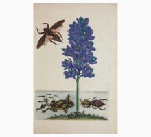 Metamorphosis insectorum surinamensium Maria Sibylla Merian 1705 0177 Insects of Surinam_jpg Baby Tee
