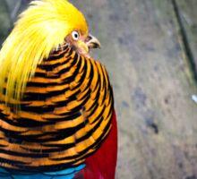 Golden Pheasant (Chrysolophus pictus) Sticker