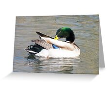 Male Mallard Preening Greeting Card
