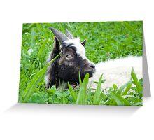 Bagot Goat Kid Greeting Card