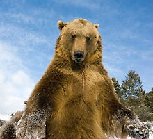 Grizzly Bear by mrshutterbug