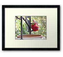 Inquisitive Multi-Coloured Parrot Framed Print
