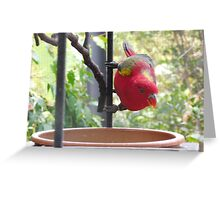 Inquisitive Multi-Coloured Parrot Greeting Card