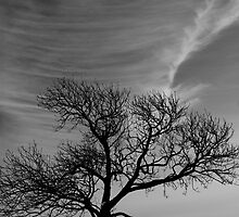 Lonely tree under great sky by Gabor Pozsgai