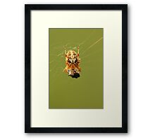 Yellow Spider on a Web Framed Print