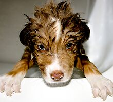 Doggy Bath Time by Terry Runion