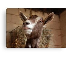 Yeeeees ... and what might youuu be doing down there? Hmmmmm?  Canvas Print