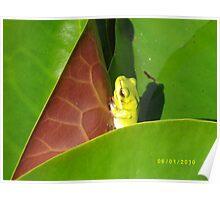 Little Green Frog-Information Centre Grafton Poster