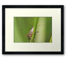 Evil Eyed Bug Framed Print
