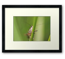 Evil Eyed Bug Framed Print